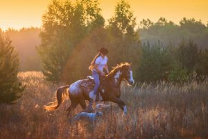 Girl riding on the red-and-white Appaloosa horse  with the whippet dogs on the field on the pain-trees  background on the sunrise