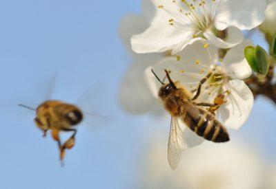 Biodling kan rädda världen
