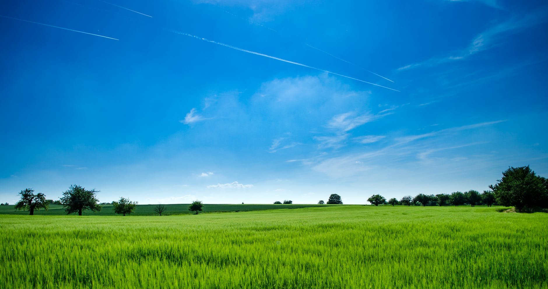 Betesmark innan skörd
